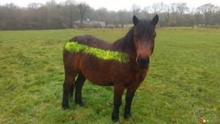 Reflective Paint to Save Ponies from Collisions with Cars