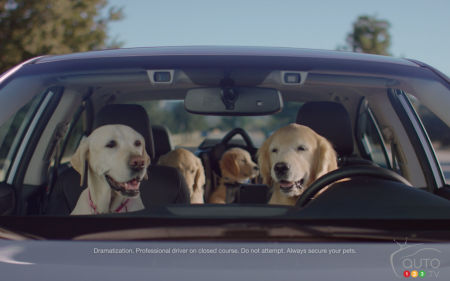 Subaru Brings Back the Barkleys for New Ad Campaign